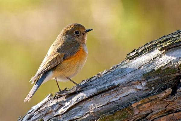 人类行为影响鸟类的存在!研究表明疫情封锁期间鸟类数量更多了