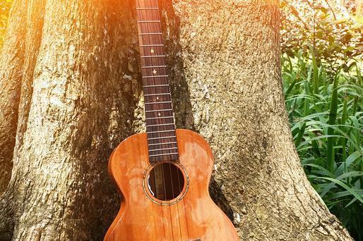 科学家利用树木年代学,推测古老乐器的年龄