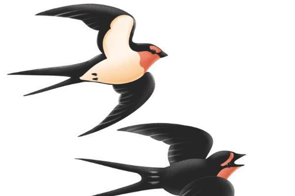 研究表明:鸟类在进行迁徙时,其肠道细菌会发生变化