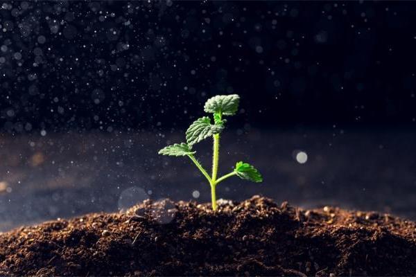 """协同""""合作""""!酵母和细菌共同生产植物激素,可更好地促进植物的生长"""