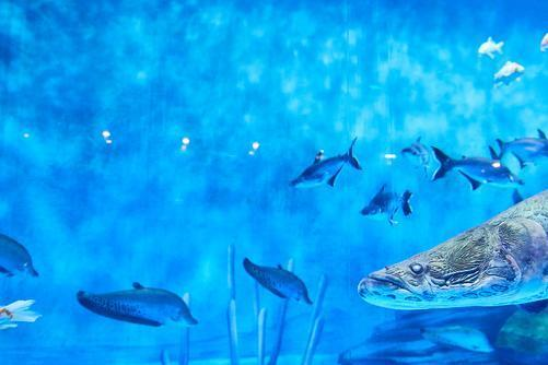 鱼也有预测能力!科学家在斑马鱼大脑内发现预测错误的神经元
