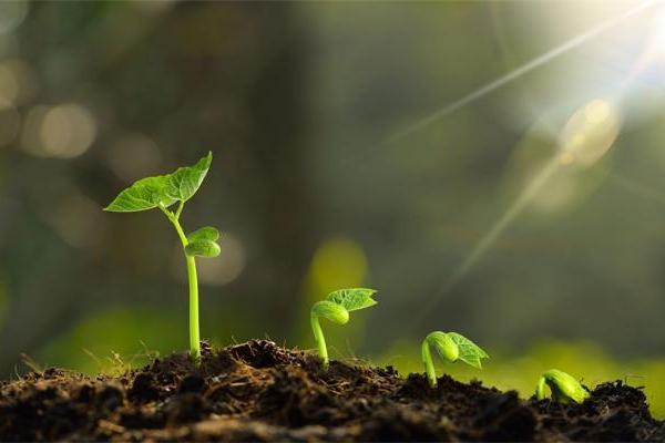 中断了2.5亿年的大爆发!原来植物进化不是连续的