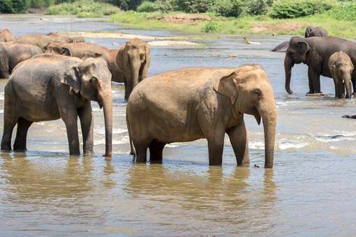 停止偷猎吧!研究称偷猎对大象种群数量下降造成长远影响