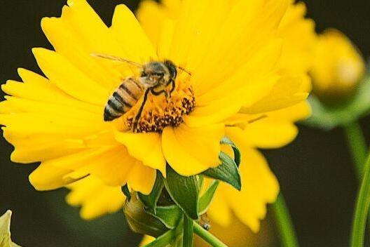 混淆蜜蜂与食蚜蝇!12岁男孩给英语教材纠错 出版社:确实有误!