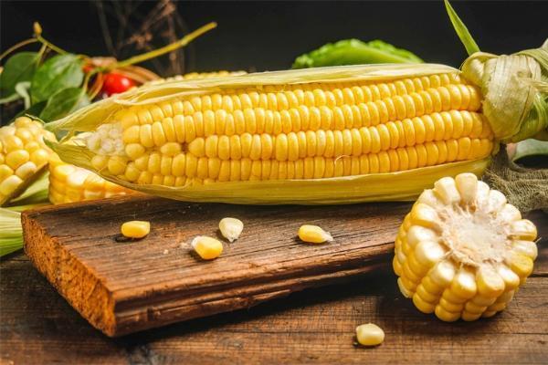 猪用新品种高油玉米上市!保证蛋白质、氨基酸、油脂摄入量和消化率