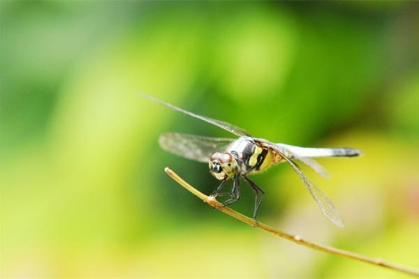 不止辨别危险昆虫的颜色!研究首次证明鸟类还能识别相关植物的外观