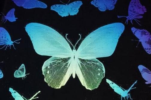 神奇!中科院团队用透明墨水打印出彩色蝴蝶、牛顿和梦露画像