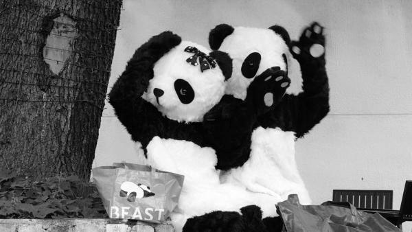 熊猫噗噗横店探班龚俊 期待一起回成都