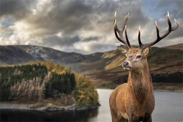 注意!美国发现两起鹿因感染朊病毒而死亡的案例