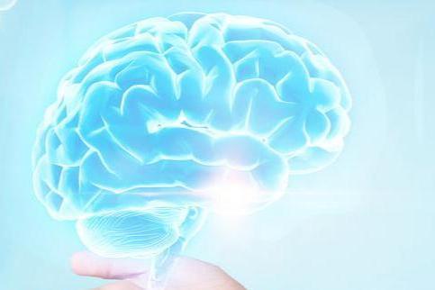 科学家研究脑细胞交流方式,有助于探索神经精神疾病新...