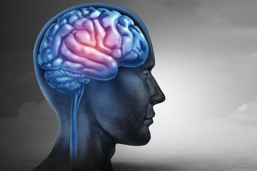 海马体的神奇力量:可汇集记忆碎片,形成叙述性记忆