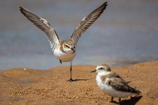 """鸟类科普大V的责任与理想—— 对话知名科普博主""""刑小天"""""""