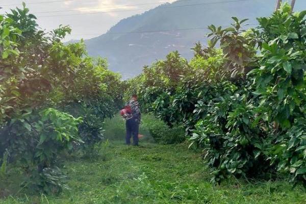 一颗柚子做成大产业,天猫助力琯溪蜜柚产业大爆发