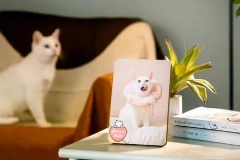 魔力猫盒四周年感恩盛典:用真诚与爱意赢得赞誉