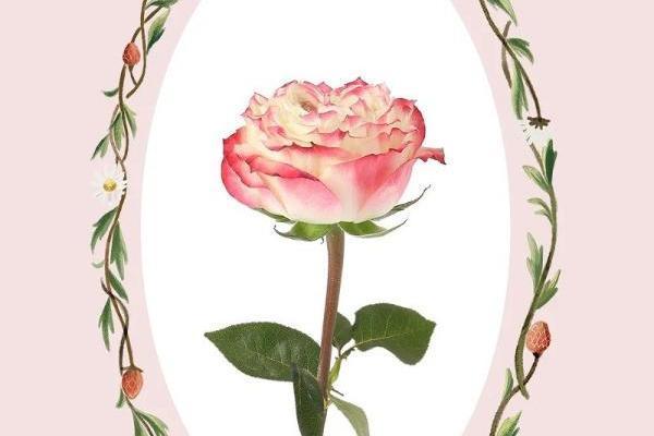 节日送花攻略,野兽派玫瑰花盒