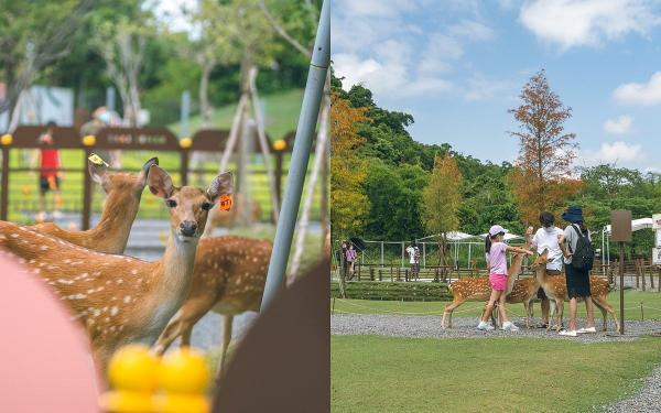 宜兰质感系生态园区「斑比山丘」情鹿签诗X小鹿御守,看疗愈小鹿还能测爱情运势