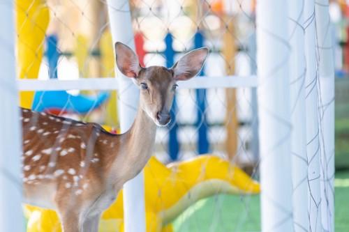 斯普瑞斯奥莱又添亲子游玩新助力,爱伴family萌宠乐园正式开业