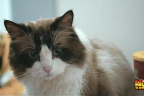 """《家有恶猫》开播,麦富迪携手谢霆锋一起""""对抗""""小恶猫"""