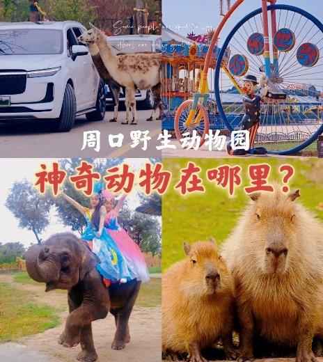 """来周口野生动物世界,体验中秋佳节的别样""""野""""色!"""