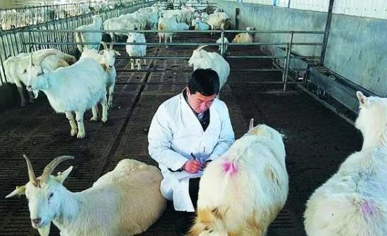 """国内乳业迎来新发展期,宜品乳业""""大动作""""成为行业缩影"""
