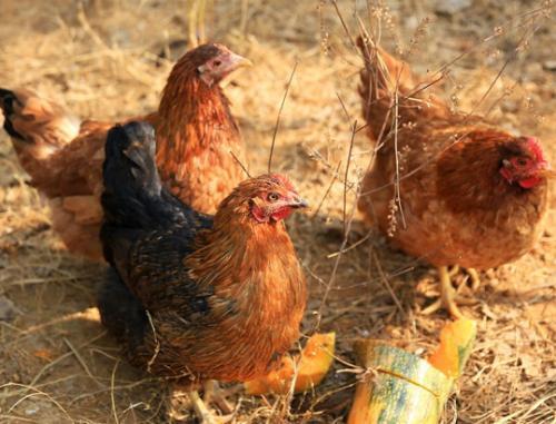 新产品、新形象、新标准——京东生鲜助推农业产业发展祭出大招