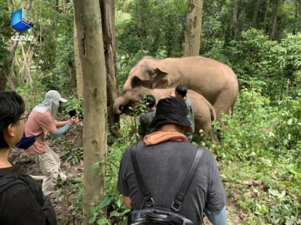《同象行》:传递充满温情的中国野生动物保护故事