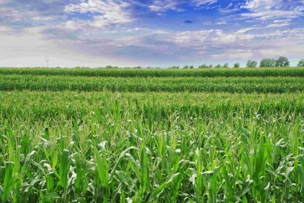 用自然馈赠定义新鲜,北纬47度鲜玉米火爆上市