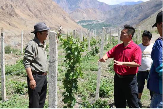在世界屋脊酿出幸福酒——天九共享携手成功红精准扶贫纪实