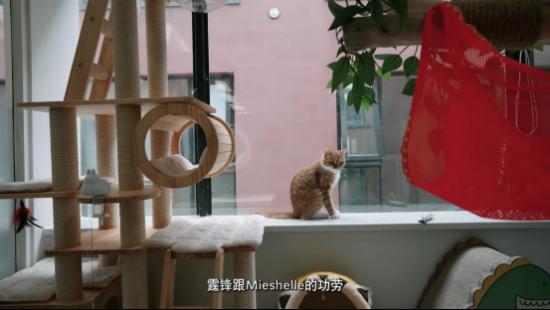 """拒绝笼养,尊重天性,""""恶霸""""司猫变身乖巧猫咪"""